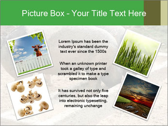 Pigs PowerPoint Template - Slide 24