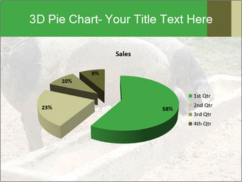 Pigs PowerPoint Template - Slide 35