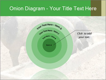 Pigs PowerPoint Template - Slide 61