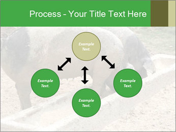 Pigs PowerPoint Template - Slide 91