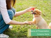Woman with dog PowerPoint Templates