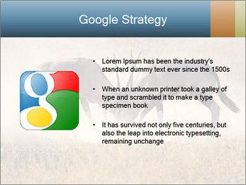 Two male gemsbok antelopes PowerPoint Template - Slide 10