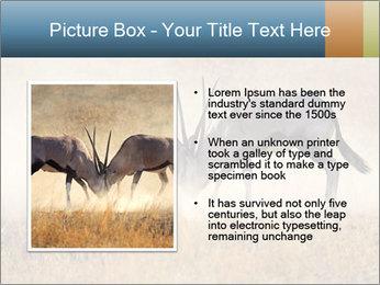 Two male gemsbok antelopes PowerPoint Template - Slide 13