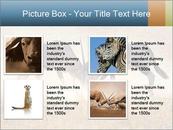 Two male gemsbok antelopes PowerPoint Template - Slide 14