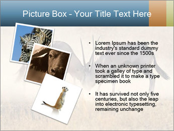 Two male gemsbok antelopes PowerPoint Template - Slide 17