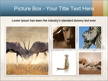 Two male gemsbok antelopes PowerPoint Template - Slide 19