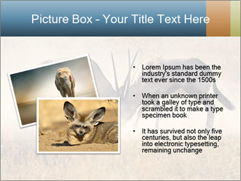 Two male gemsbok antelopes PowerPoint Template - Slide 20