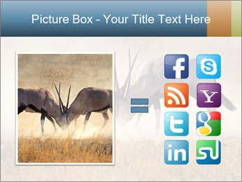 Two male gemsbok antelopes PowerPoint Template - Slide 21