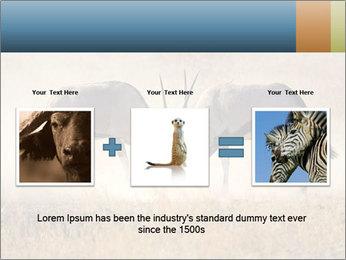 Two male gemsbok antelopes PowerPoint Template - Slide 22