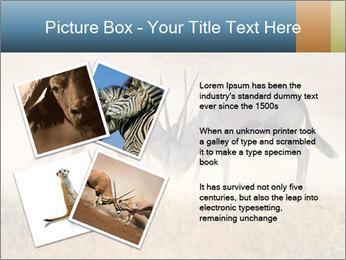 Two male gemsbok antelopes PowerPoint Template - Slide 23