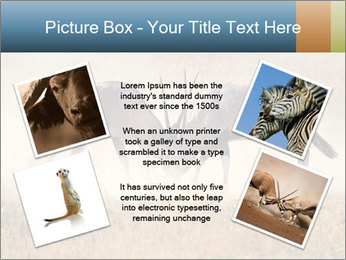 Two male gemsbok antelopes PowerPoint Template - Slide 24