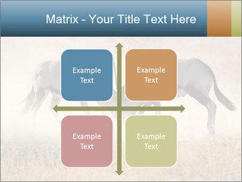 Two male gemsbok antelopes PowerPoint Template - Slide 37
