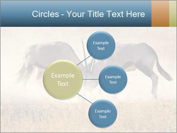Two male gemsbok antelopes PowerPoint Template - Slide 79