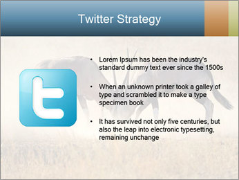 Two male gemsbok antelopes PowerPoint Template - Slide 9
