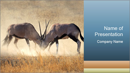 Two male gemsbok antelopes PowerPoint Template - Slide 1