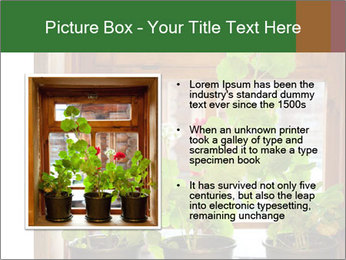 Geranium flowers PowerPoint Template - Slide 13
