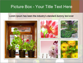 Geranium flowers PowerPoint Template - Slide 19