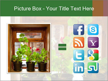 Geranium flowers PowerPoint Template - Slide 21