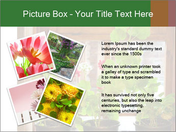 Geranium flowers PowerPoint Template - Slide 23