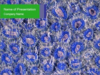 0000092332 Modèles des présentations  PowerPoint