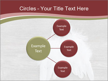 Decorative feathers PowerPoint Template - Slide 79