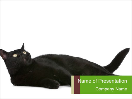 Cat in front PowerPoint Template