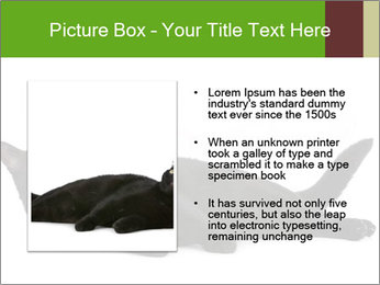 Cat in front PowerPoint Template - Slide 13