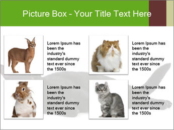 Cat in front PowerPoint Template - Slide 14