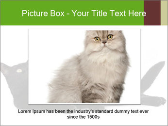 Cat in front PowerPoint Template - Slide 15