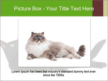Cat in front PowerPoint Template - Slide 16