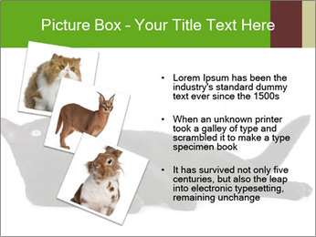 Cat in front PowerPoint Template - Slide 17