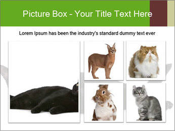 Cat in front PowerPoint Template - Slide 19