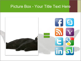 Cat in front PowerPoint Template - Slide 21