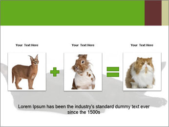 Cat in front PowerPoint Template - Slide 22