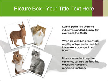 Cat in front PowerPoint Template - Slide 23