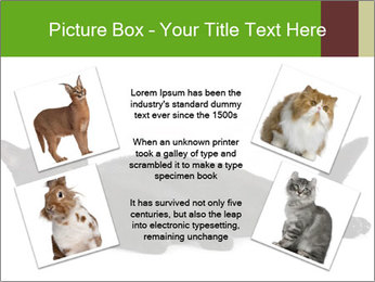 Cat in front PowerPoint Template - Slide 24