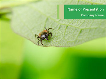 Frontal of tick PowerPoint Template