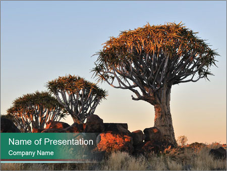 Sunrise at Forest PowerPoint Templates