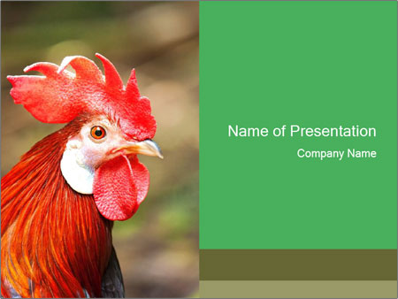 Red Rooster PowerPoint Template