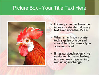 Red Rooster PowerPoint Template - Slide 13