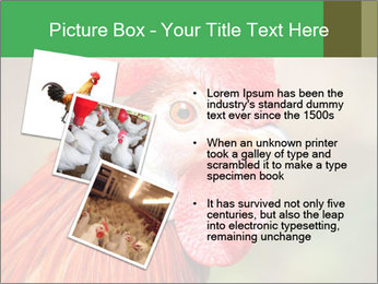 Red Rooster PowerPoint Template - Slide 17