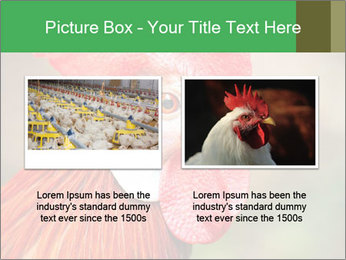Red Rooster PowerPoint Template - Slide 18