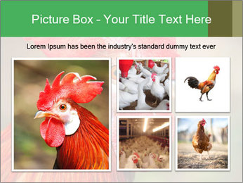Red Rooster PowerPoint Template - Slide 19