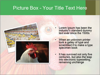 Red Rooster PowerPoint Template - Slide 20