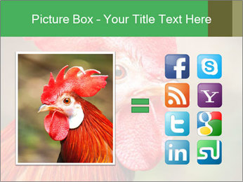 Red Rooster PowerPoint Template - Slide 21