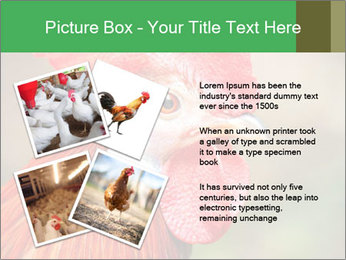 Red Rooster PowerPoint Template - Slide 23