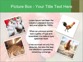 Red Rooster PowerPoint Template - Slide 24