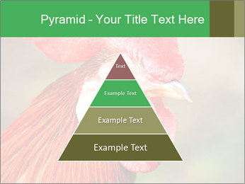 Red Rooster PowerPoint Template - Slide 30