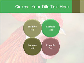 Red Rooster PowerPoint Template - Slide 38