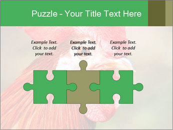 Red Rooster PowerPoint Template - Slide 42